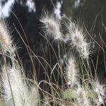 Temporada de alergias marcada por las altas temperaturas