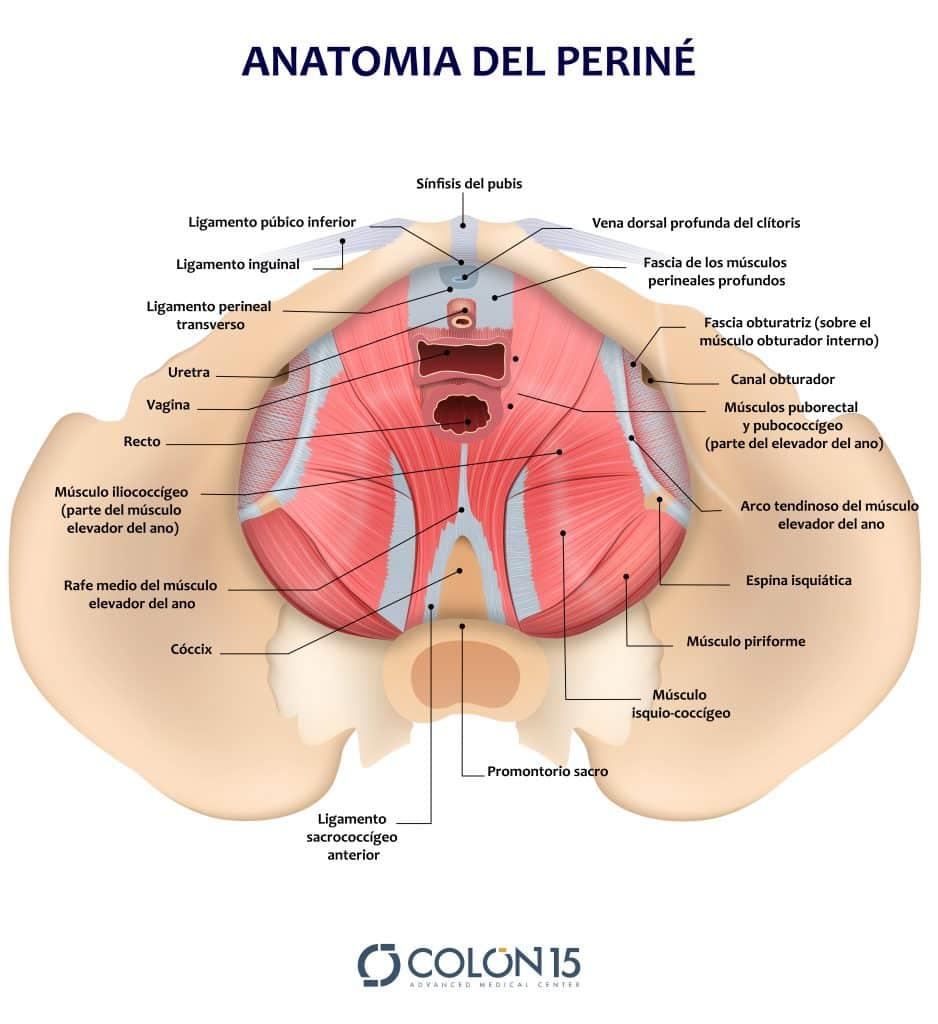 Anatomía de la zona perineal femenina.